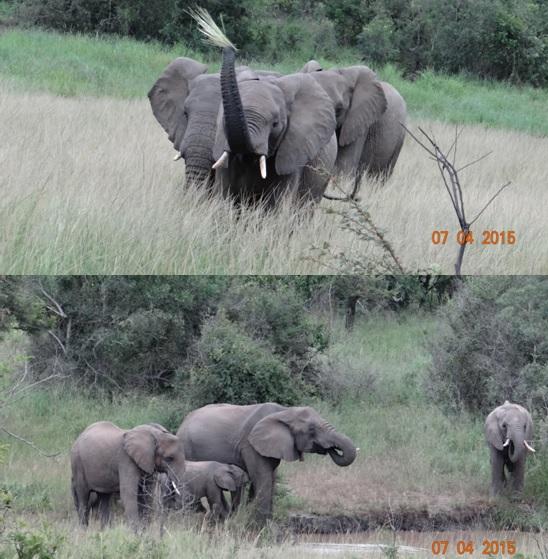 3 day safari from Durban; Elephants