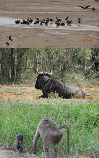 Durban day safari, Animal selection