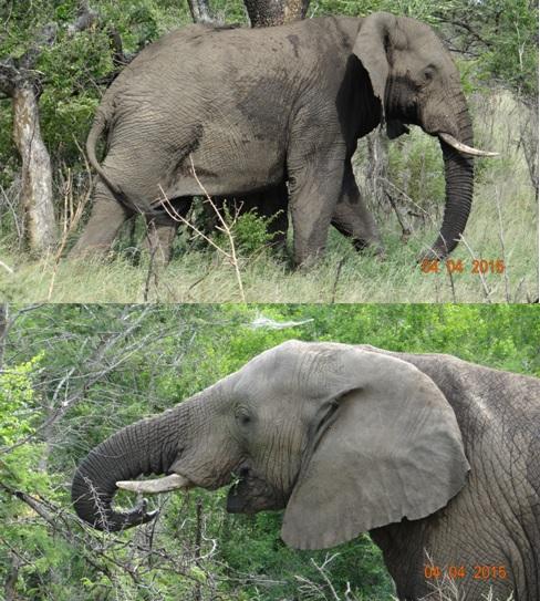 Durban day safari, Elephants everywhere