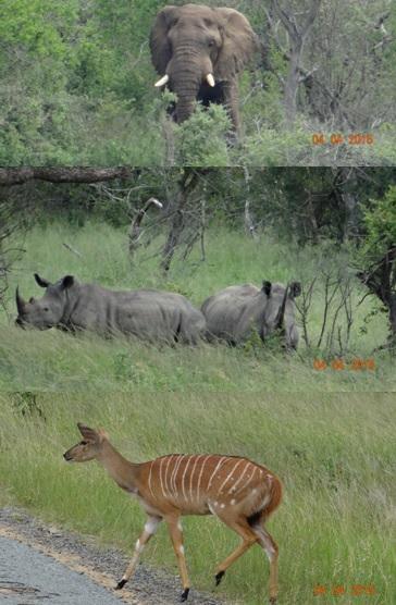Durban day safari, Rhino, Nyala and Elephant