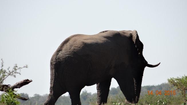 Durban day trip to Hluhluwe; Elephant