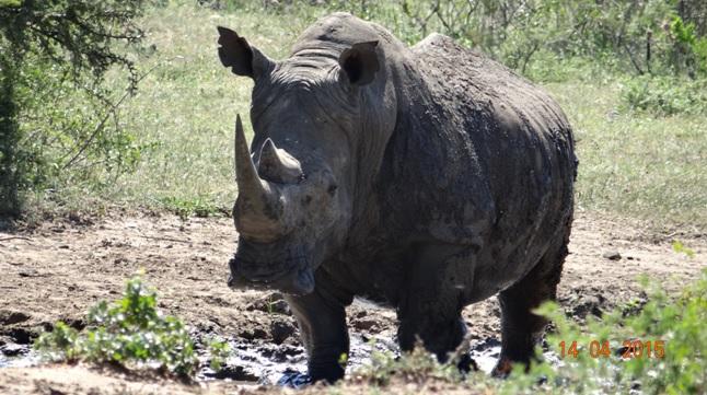 Durban day trip to Hluhluwe; Rhino