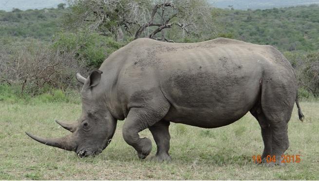 Durban safari in KwaZulu Natal; Rhino