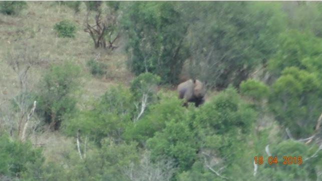 Safari from Durban in South Africa; Black Rhino too far away