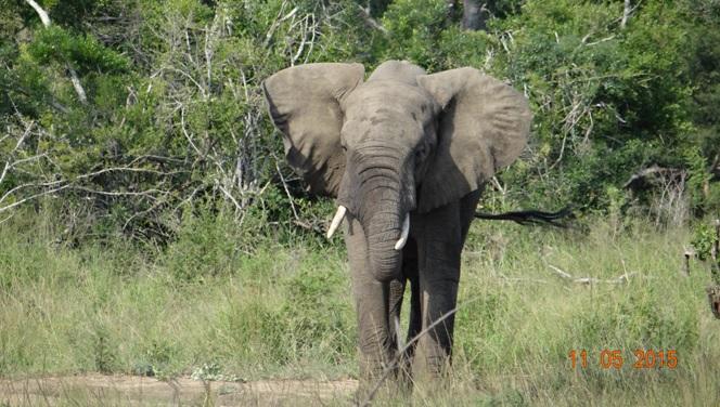 Durban day safari tour; Elephant