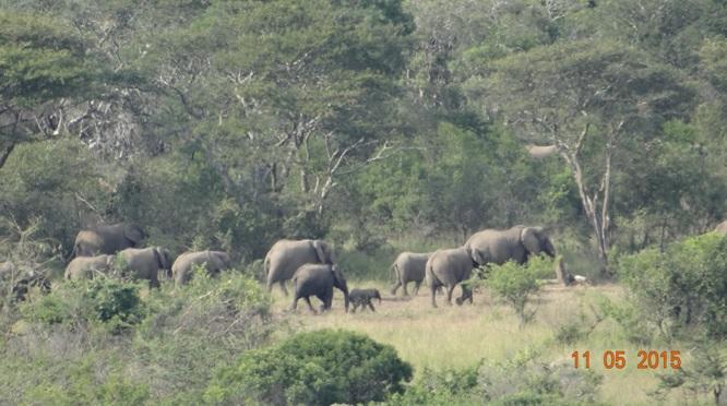 Durban day safari tour; Herd of Elephant