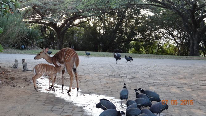 Durban overnight safari tours; Animals outside my bedroom