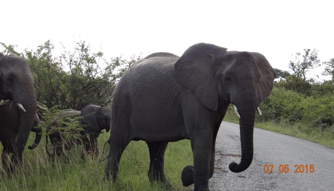 Durban overnight safari tours; Elephants crossing