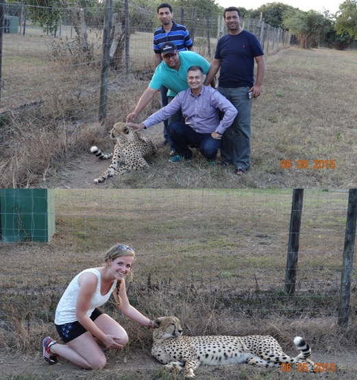 Durban overnight safari tours; Guests with the Cheetah at Cat rehab center
