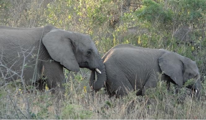 Durban 2 day safari; Elephants