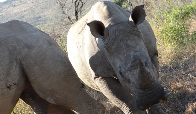 Durban 2 day safari; Rhino