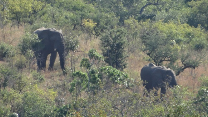 Durban day safari; Elephants