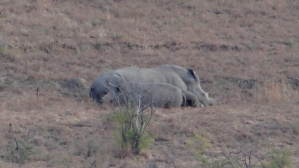 Durban private safari; Rhino