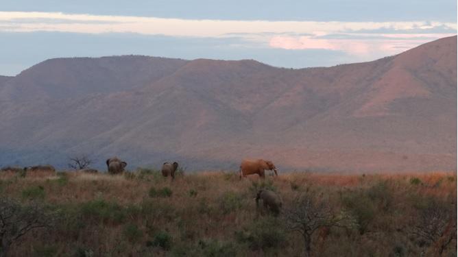 Safari from Durban; Elephants at sunset
