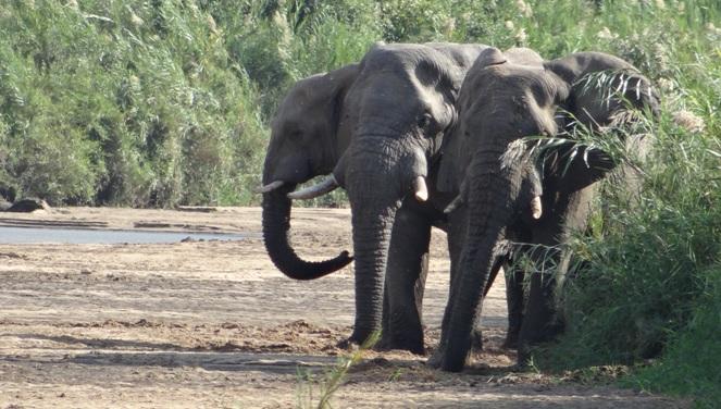 Safari from Durban; Elephants