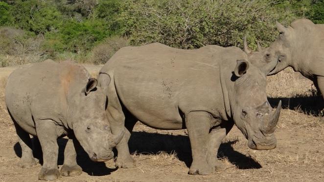 Safari from Durban; Rhino