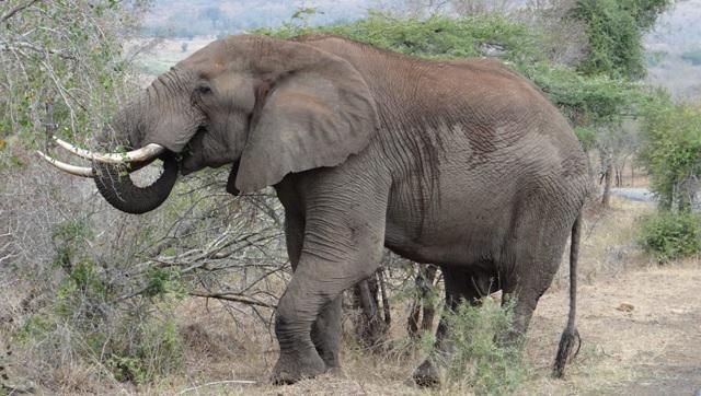 Big 5 safari from Durban, Elephant