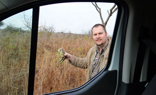 Big 5 safari from Durban, Moving a male Leopard tortoise off the road