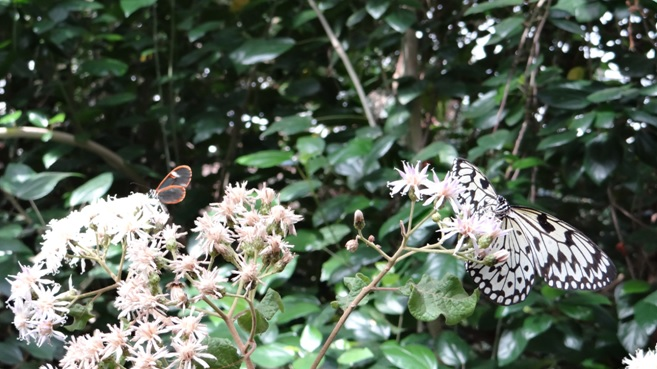 Durban midlands tour; Butterflys for Africa