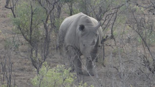 Hluhluwe Big 5 Safari; Rhino