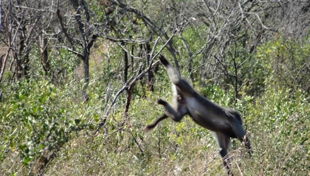 Hluhluwe Big 5 safari from Durban, Baboon falls