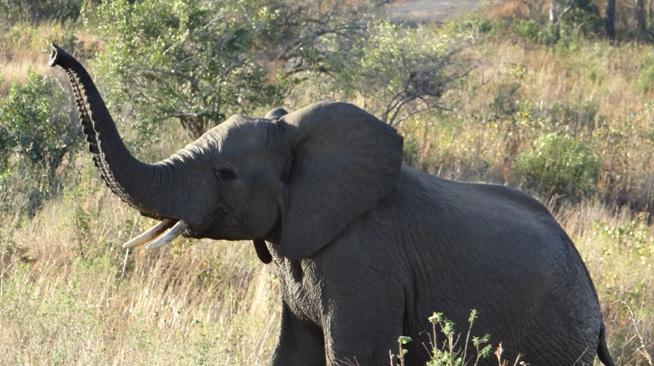 Hluhluwe Big 5 safari from Durban, Elephant