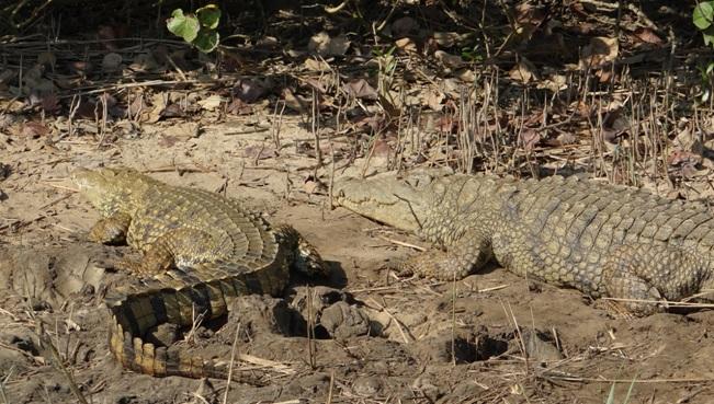 Hluhluwe overnight safari; Crocodiles
