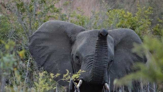 Hluhluwe overnight safari; Elephant