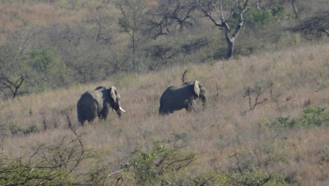 Big 5 safari Durban; Elephants