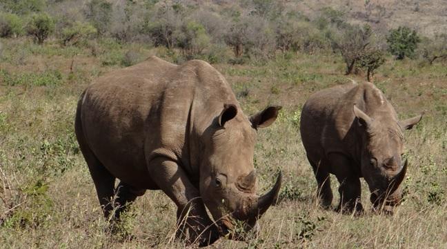 Big 5 safari Durban; Rhino