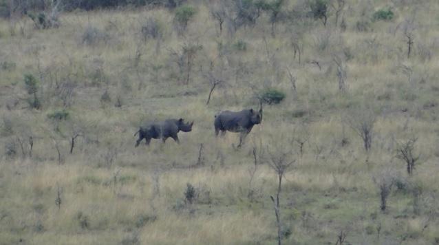 Durban day safari; Black Rhino