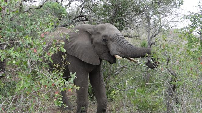 Durban day safari; Elephant feeding
