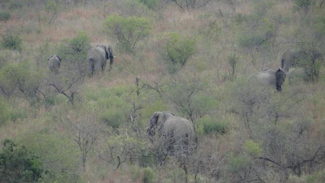 Durban day tour; Elephants