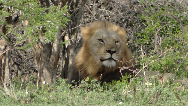 Durban overnight safari; Big Lion