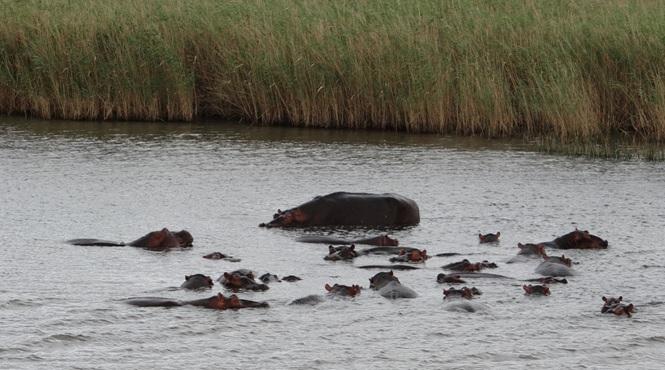 Durban overnight safari; Hippos