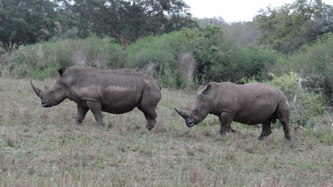 Durban overnight safari; Rhino