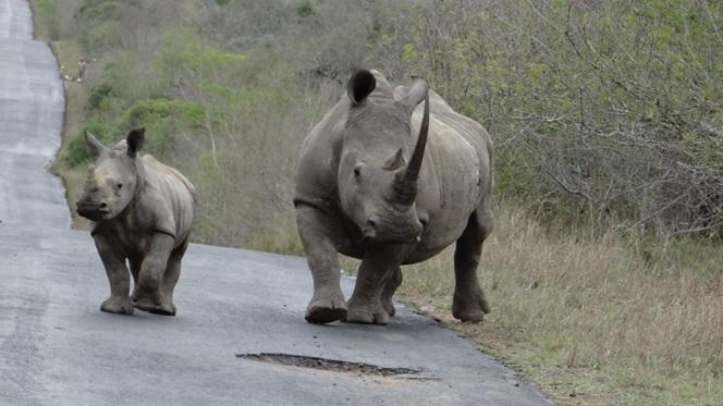 Durban safari; Rhino