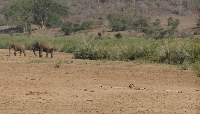 Durban safari tour; Lions and Elephants