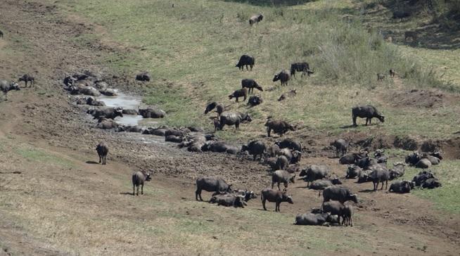 Durban tour; Buffalo, Nyala and Baboons