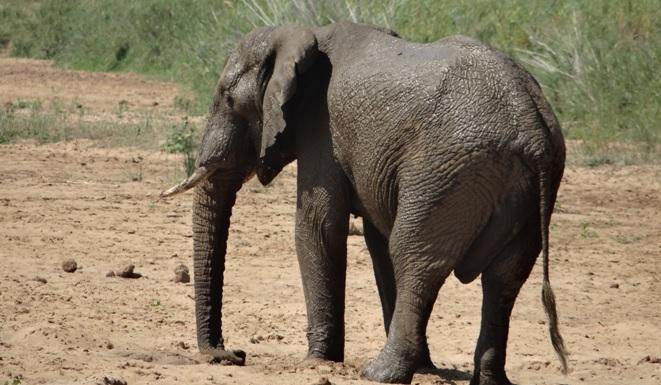 Durban tour; Elephant