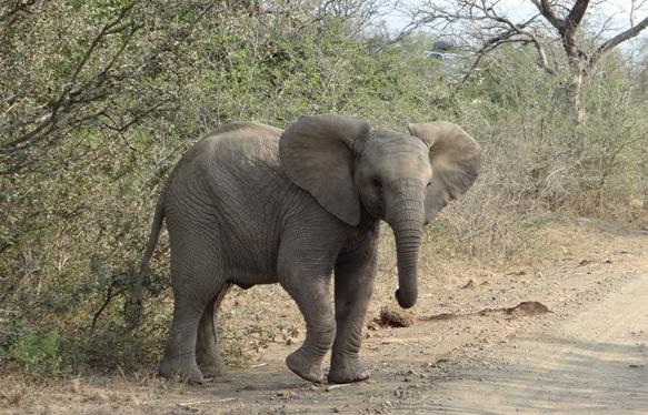 Hluhluwe Imfolozi safari; Elephant baby