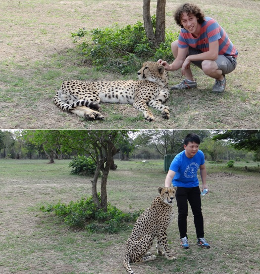 Hluhluwe Imfolozi safari; two of my clients interacting with the Cheetah