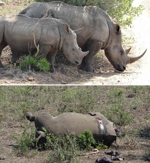 Rhino comparison; The reality