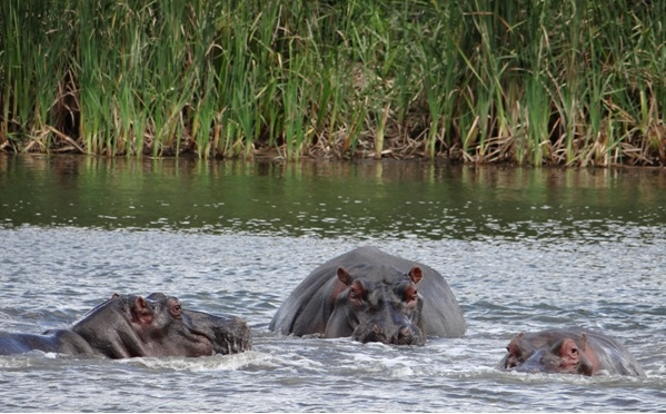 Durban mini safaris; Hippos