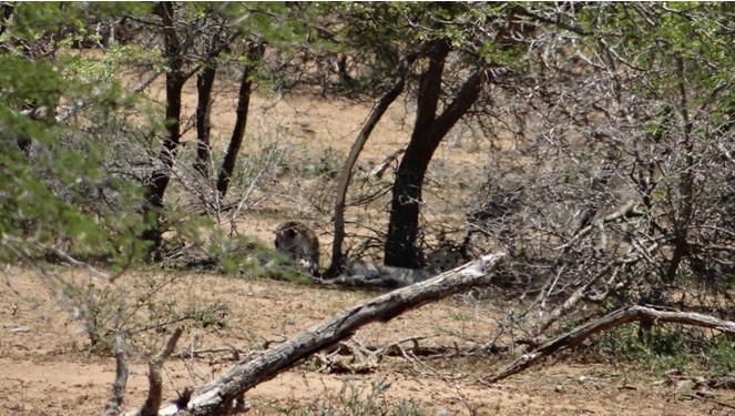 Hluhluwe game reserve 4 day safari; Cheetah mom and cub