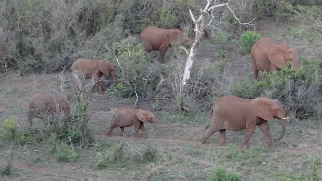 Hluhluwe game reserve 4 day safari; Elephants