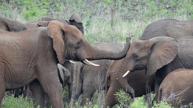 Durban safari tour; Elephant