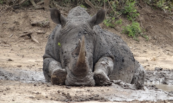 Durban safari tours; Cute Rhino