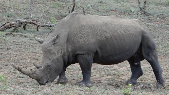 African safari from Durban; Rhino