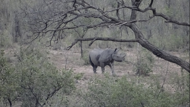 Durban safari tours; Black Rhino